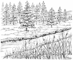 P7704 Pine, Stream And Cattails