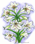 P8461 Large Easter Lilies