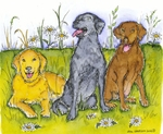 P8546 Three Labrador Retrievers