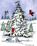 P8872 Winter Birds And Snowy Spruce