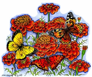 P8955 Three Butterflies On Marigolds