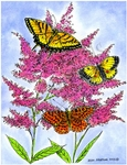 P8960 Three Butterflies On Astilbe