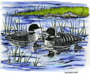 P9034 Loon Pair And Babies On Pond