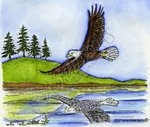 P9050 Soaring Eagle Over Water With Pines