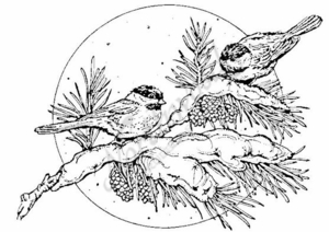 P946 Chickadees On Branch