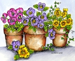 P9488 Three Pansy Pots