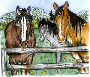 P9744 Horse Family And Wooden Fence