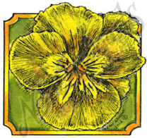 CC9455 Pansy Blossom In Small Notched Square