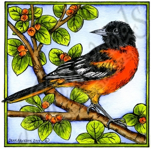 PP10189 Baltimore Oriole On Blossom Branch In Square Frame