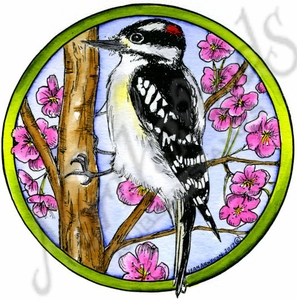 PP10196 Downy Woodpecker On Branch In Circle Frame