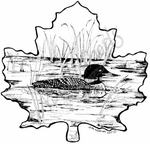 PP7366 Loon In Maple Leaf Frame