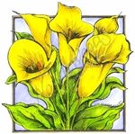 PP8490 Calla Lilies In Rectangle