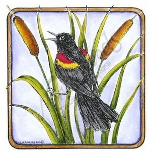 PP8538 Red-winged Blackbird And Cattails In Square