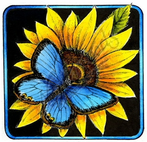 PP8967 Common Blue Butterfly On Sunflower Blossom Square