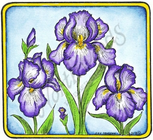 PP9094 Iris In Square