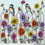PP9485 Cosmos, Fence And Chickadees