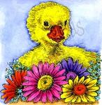 PP9714 Eleanor's Duckling And Daisies
