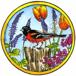 PP9764 Baltimore Oriole In Spring Circle