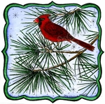 PP9864 Cardinal On Pine Branch In Curved Frame
