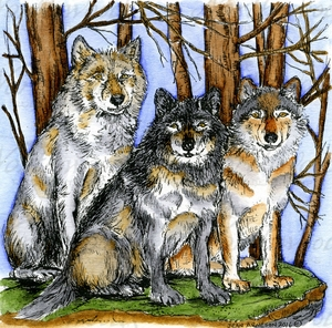 PP9977 Three Wolves In Woods