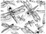 R1500 Dragonfly Background Block