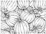 R3229 Pumpkin Patch Background Block