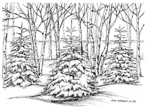 R8317 Three Snowy Pines In Woods
