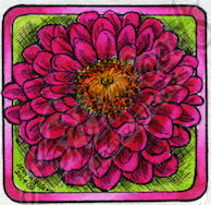 CC9453 Zinnia Blossom In Small Square