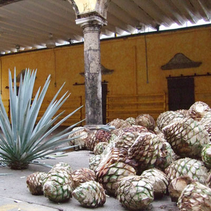 Raw Unrefined Speciality Agaves