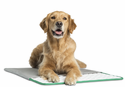 Pet Therapeutics MagnaPetic Magnetic Powered Relief Pad (DISCONTINUED)