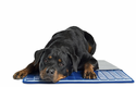 Pet Therapeutics TheraCool Gel Cell Cooling Pad