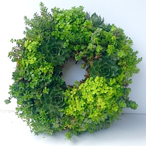 "Succulent Wreath (12"" diameter)"