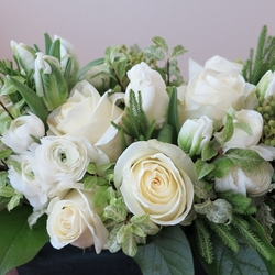 Chic Ranunculus- out of stock