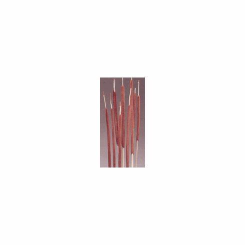 Pencil Cattails <br>100 Stems <br>Dark Brown