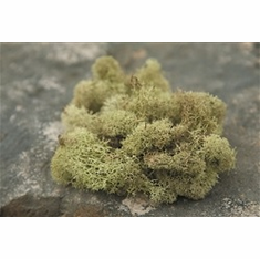 Reindeer Moss <br>Light Green - 2.5 oz.