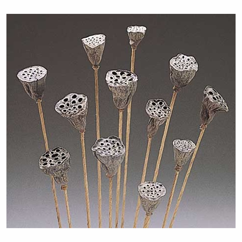 Small Lotus Pods <br> 10 Stems - Natural
