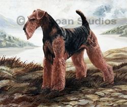 """Airedale Terrier """"Black Jack""""  Limited Edition Print"""