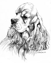 "American Cocker Spaniel Art  ""Ascob Portrait"" Limited Edition Print"