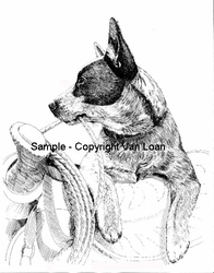 "Australian Cattle Dog ""Puppy On A Saddle""  Limited Edition Print"