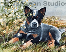"Australian Cattle Dog ""Puppy with Daisies"" Limited Edition Print"