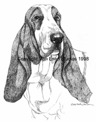 "Basset Hound ""Head Study"" Limited Edition Print"