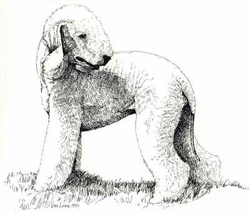 """Bedlington Terrier """"Standing""""  Limited Edition Print"""