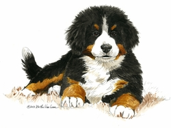 """Bernese Mountain Dog """"Bright Eyes"""" Limited Edition Print"""