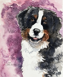 """Bernese Mountain Dog  """"Eyes of Trust"""" Limited Edition Print"""