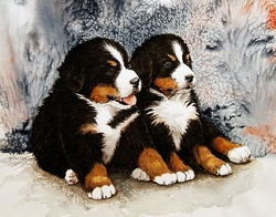 """Bernese Mountain Dog """"Puppies and Blue"""""""
