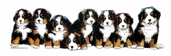 """Bernese Mountain Dogs """"Puppies and Bows"""""""