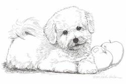 "Bichon Frise ""Puppy and Apple"" Limited Edition Print"