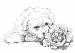"Bichon Frise ""Puppy and Rose"" Limited Edition Print"