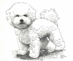 """Bichon Frise """"Puppy Standing"""" Limited Edition Print"""