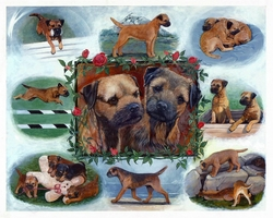 Border Terrier Club of America